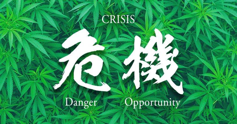 Danger Opportunity The Cannabis Industryuanduyou