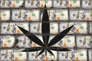 Success Cannabis Industry